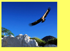 Fly with Griffon Vultures during your paragliding holiday or paragliding course with Baz and Sam Rhodes in Andalucia, Spain